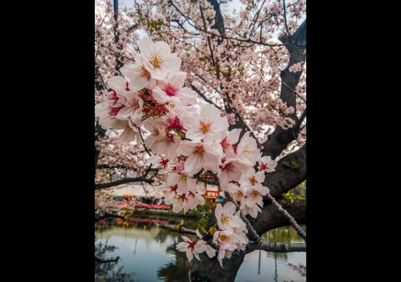Japan through lens of Indian photographers
