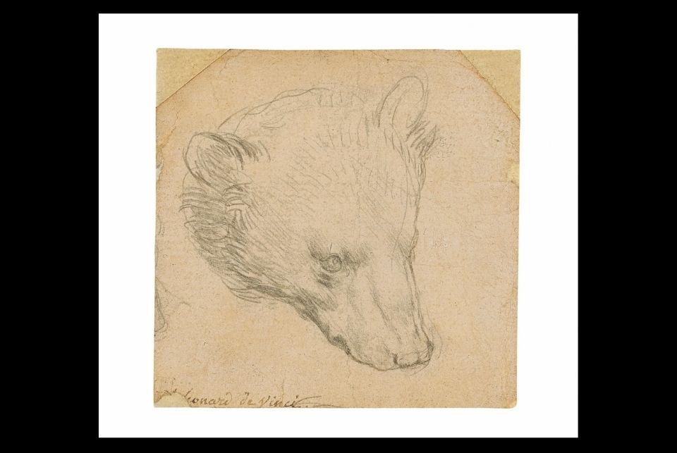 'Head of a Bear,' a rare drawing by Leonardo da Vinci to be auctioned